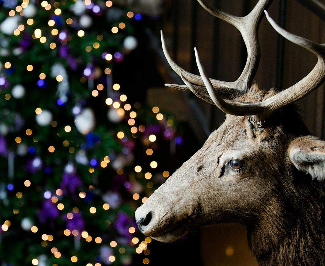 xmas-deer-special-gallery-img.jpg